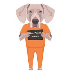 Mugshot prison clothes dog weimaraner vector