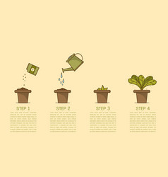 plant growing step vector image
