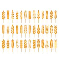 wheat grain icons wheats bread logo farm grains vector image