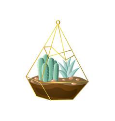 Cute cacti succulent plant in geometric terrarium vector
