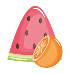 fresh watermelon portion with orange vector image