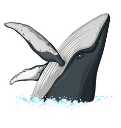 half body of humpback whale vector image