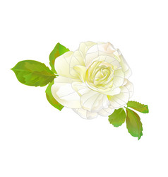 white rose simple stem with leaves watercolor vector image