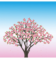 Beautiful spring background with sakura vector image