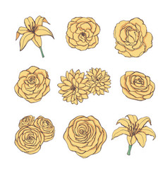 drawn set of yellow rose lily peony flowers vector image