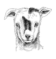 Hand drawn portrait funny goat baby vector