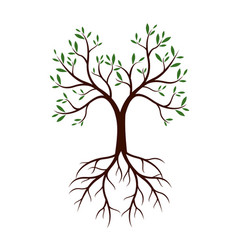 natural tree with leaves and roots vector image