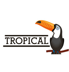 tropical exotic bird animal card vector image