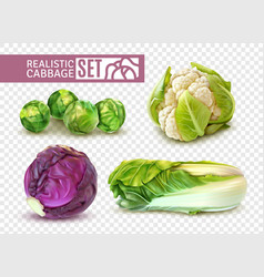 realistic cabbage set vector image