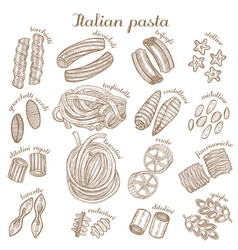 Set of different pasta shapes vector