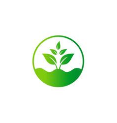 green tree plant bio organic seed logo vector image