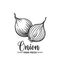 Hand drawn onion icon vector