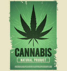 medical cannabis plant marijuana weed poster vector image