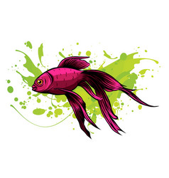 red drum redfish vector image