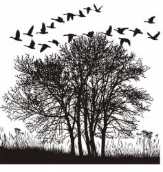 migratory geese vector image