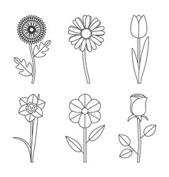 flowers line drawings vector image vector image