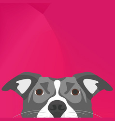 Dog pitbull looking over wall vector