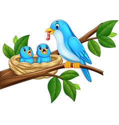 mother blue bird feeding babies in a nest vector image