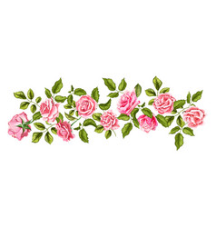 rose flower blossom leaf pattern vector image