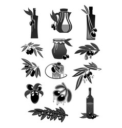 olives olive oil bottles and pitchers vector image