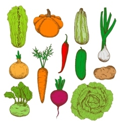 Healthy fresh harvested vegetables sketch icons vector image vector image