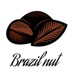 color of a brazil nut vector image