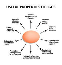 useful properties of chicken eggs vector image