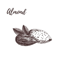 Almond hand drawn sketch vector image vector image