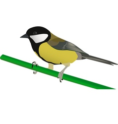 little tit perched on twig vector image