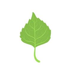 Birch tree green leaf vector