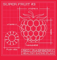 Blueprint diagram line drawing of a raspberry vector image