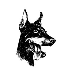hand draw n doberman dog vintage vector image
