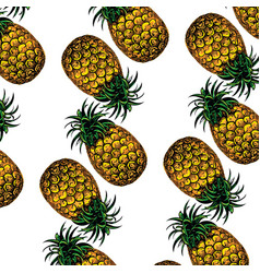 pineapple on white background vector image