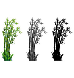 Set of bamboo plant vector