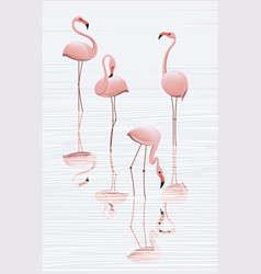 flock of flamingos in the water vector image