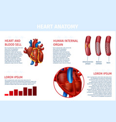 heart internal blood cell therapy realistic banner vector image