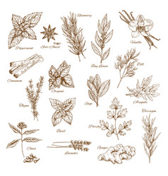 Herbs spices and leaf vegetable sketch poster vector