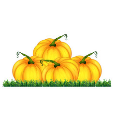 Isolated pumpkin on white background vector