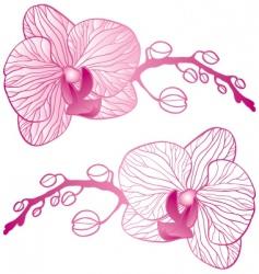 Orchid branch vector