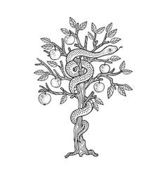 serpent on apple tree sketch vector image