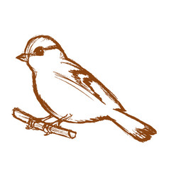 tit bird on branch vector image vector image