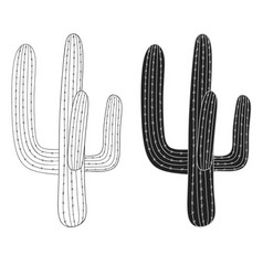 mexican cactus desert plant vector image