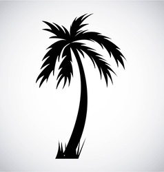 tree palm design vector image