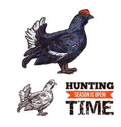 Capercaillie bird sketch hunting season poster vector
