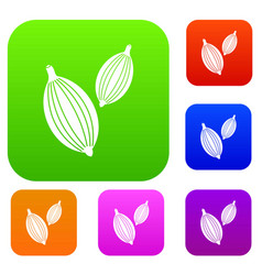Cardamom pods set color collection vector