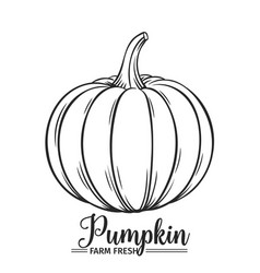 hand drawn pumpkin icon vector image