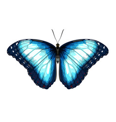 Single blue butterfly morpho on a white background vector