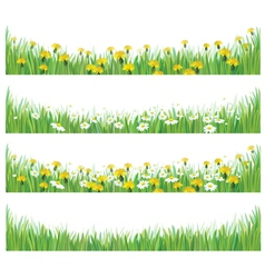 grass flowers isolated vector image vector image