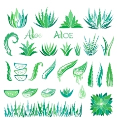 Aloe vera design elements Icons collection vector image vector image