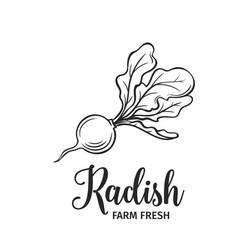 hand drawn radish icon vector image vector image